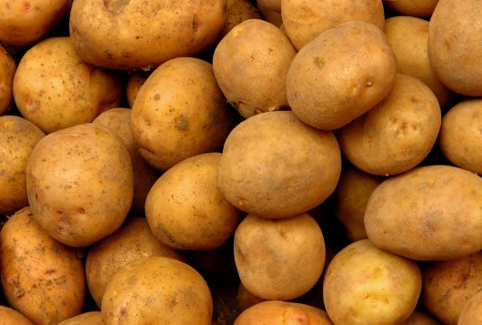 Effects of agricultural production systems and their components on protein profiles of potato tubers