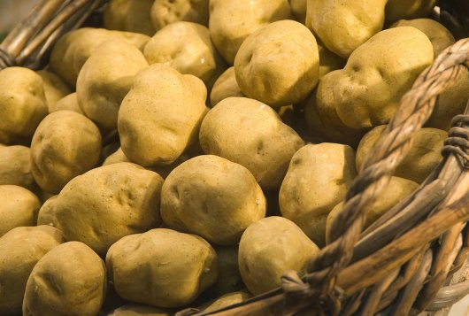 Proteomic analysis of the potato tuber life cycle