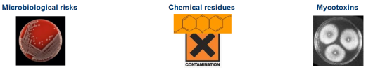 microbiological risks, chemical residues and mycotoxins