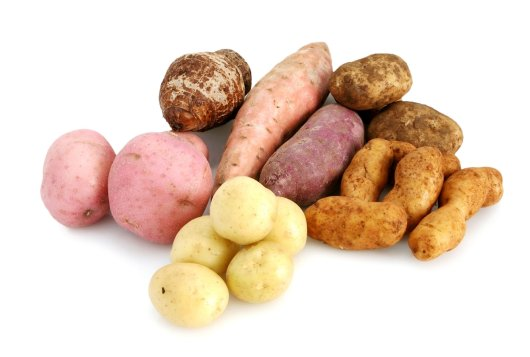 Comparison of Tuber Proteomes of Potato Varieties, Landraces, and Genetically Modified Lines